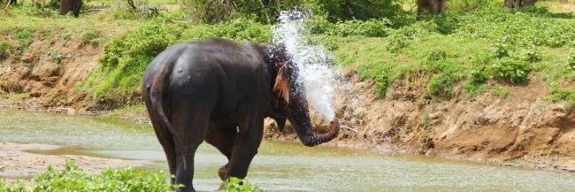 gallery image - elephants in the wild