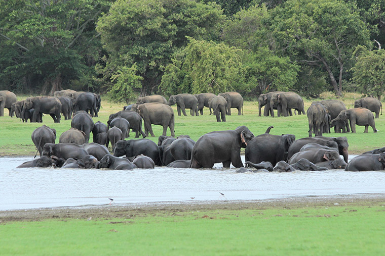 Uda Walawe National Park rivals the African reserves