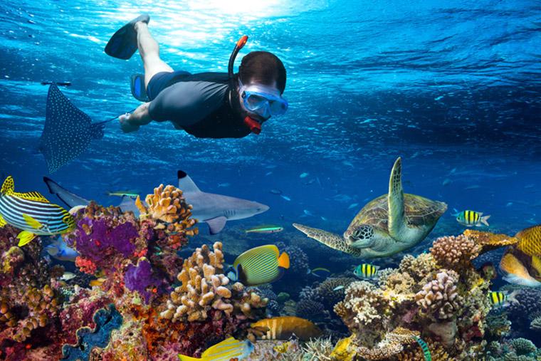 Sri lanka is a mecca for scuba divers