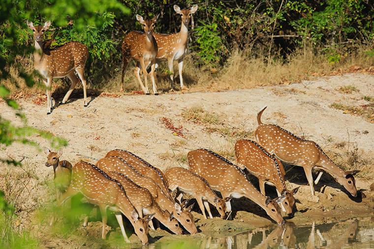 sri lanka couples safari tours